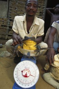 Villagers weighing Goliath Frog (Conraua goliath) largest frog in the world, endangered, Cameroon, Africa