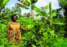 How Forest Gardens in Cameroon are sustained despite covid-19 threat