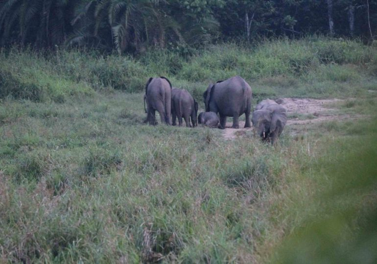 Elephants In Search Of Safe Havens