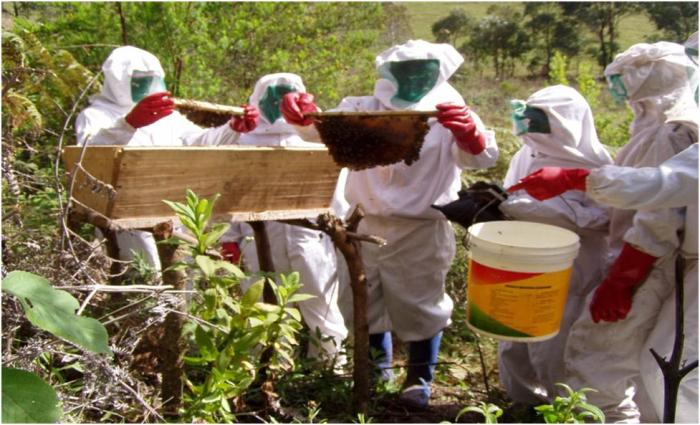 Magha Bee Farmers Trained On Harvesting Techniques