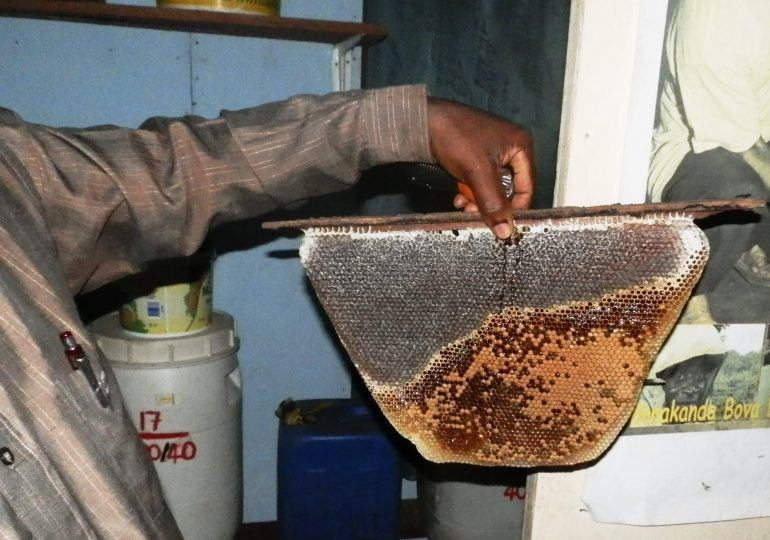 Bee Farming Maintains Natural Ecosystem