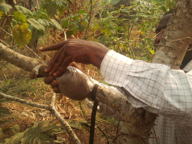 Agroforestry Technicians Refreshed With Special Techniques