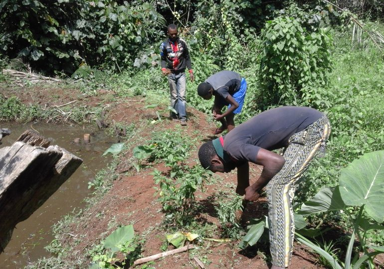 Banfeko Chief Integrates Agroforestry System Into Aquaculture