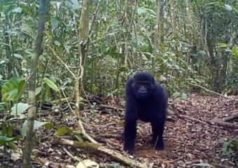 Why Cameroon's Biodiversity is Declining and its Consequences