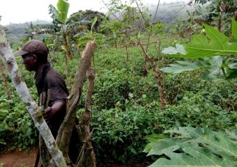 Impact of COVID 19 on agricultural productivity in Nlonako Landscape
