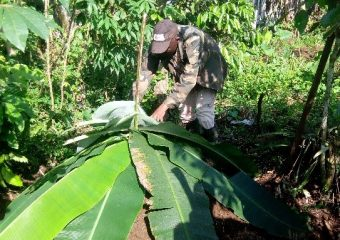 Small holder farmers at Nlonako Muanenguba mountains gain capacity on composting