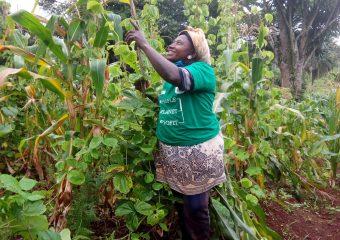 Forest Garden Farmer Uses Acacia Branches as Support, to Grow Climbing Beans