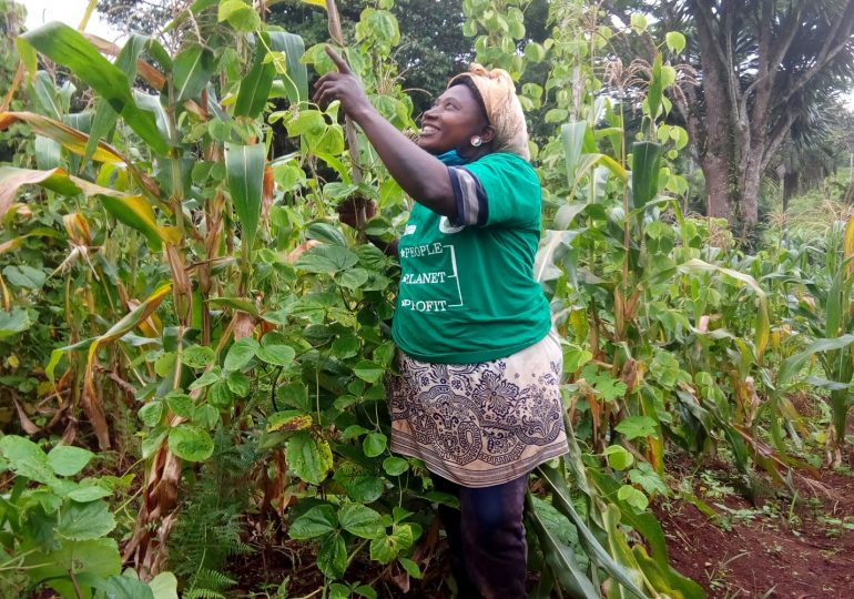 Forest Garden Farmer Uses Acacia Branches as Support, to Grow Climbing Beans