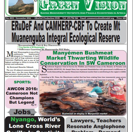 Green Vision Newspaper 0033