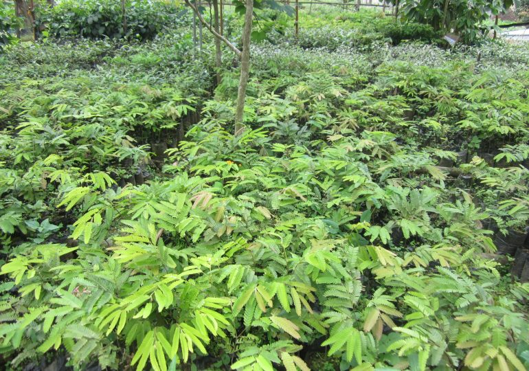 Over 5000 Trees To Be Planted At Bomboko