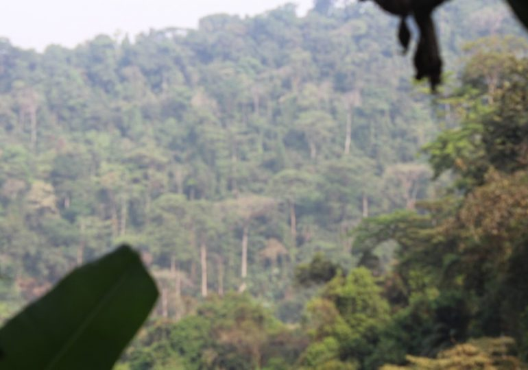 Government To Create Another Protected Area In Southwest Cameroon
