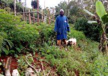 ACACIA, SECRET TO IMPROVED SOILS FERTILITY AND OPTIMUM PRODUCTION