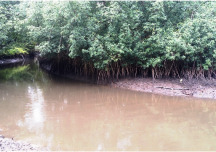 Bakassi Mangroves in Need of  Urgent Conservation Action!