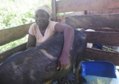 NADEV's Women Entrepreneurship Project, Improving Widow's Livelihoods In SWR
