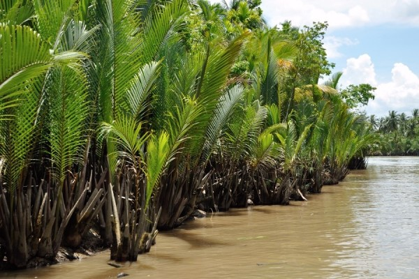 SOS: Cameroon Mangroves Cry for Help!