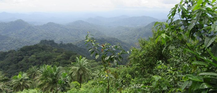 Rainforest Trust USA Provides Three Year Funding For Mak-Betchou