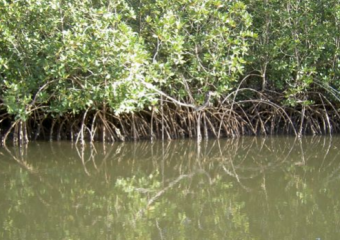 Wetlands in dire need for attention