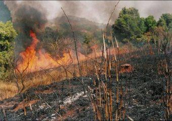 When Bush Burning Befits  Practice