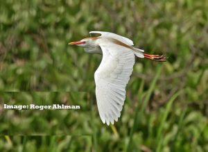 """Birds connect our world"" ERuDeF celebrates the world Migratory Bird Day"