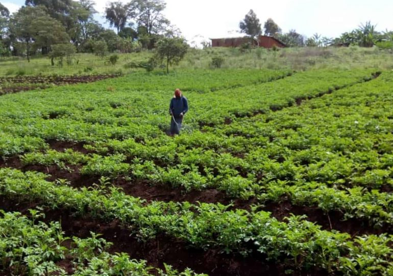 Market gardening, Target for Crime and Insecurity in Mt. Bamboutos Areas