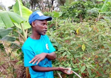 Small-holder Farmer with Entrepreneurial Mindset Embraces Forest Garden Practices in Bakassa, Haut-Nkam Division