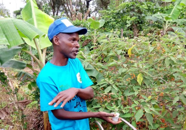 Small-holder Farmer with Entrepreneurial Mindset Embraces Forest Garden Practices in Bakassa, Haut-Nkam Division