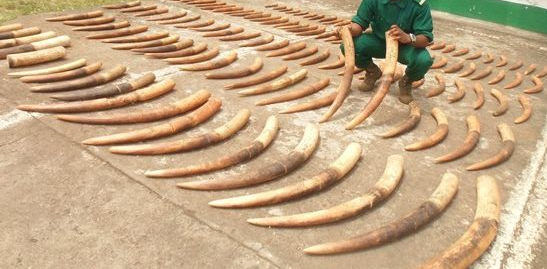 MINFOF Blames Custom Officials For Illegal Wildlife Trafficking